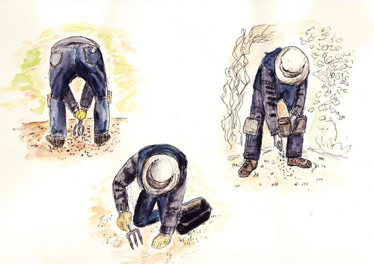 three-Chuck-gardening-sketches-scaled